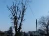 rizikove-prorezy-stromu