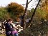 kácení podzim 2009