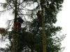 ořez větví před kácením kmenů