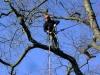 zdravotní prořez stromů