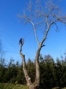Rizikové kácení a zdravotní prořez stromů