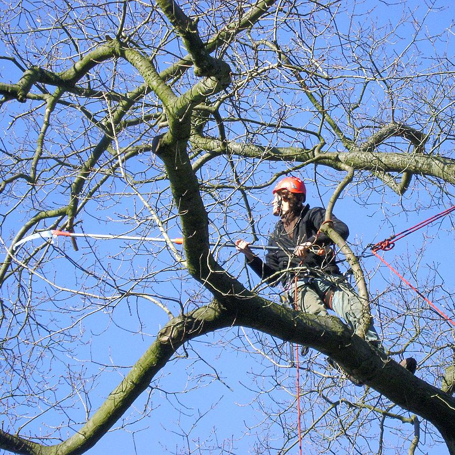 Horolezec ořezává strom